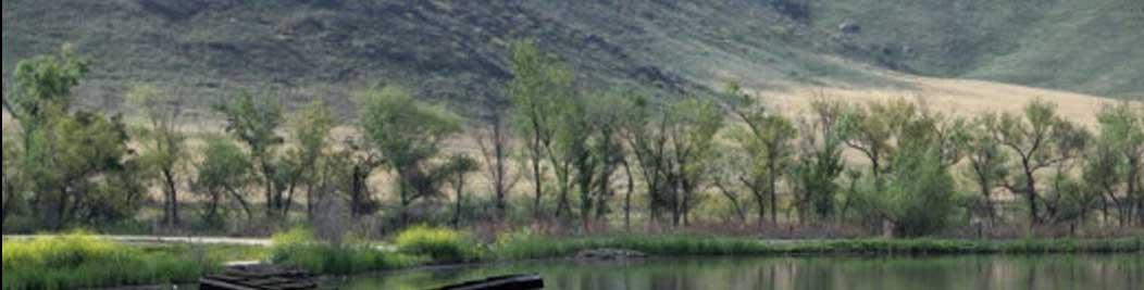 San Jacinto Wildlife