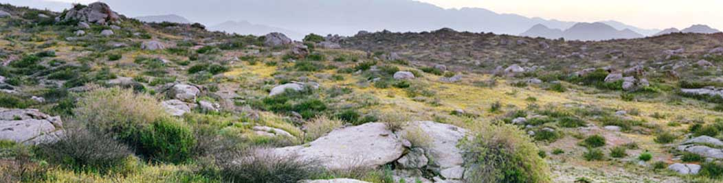 The Motte Rimrock Reserve