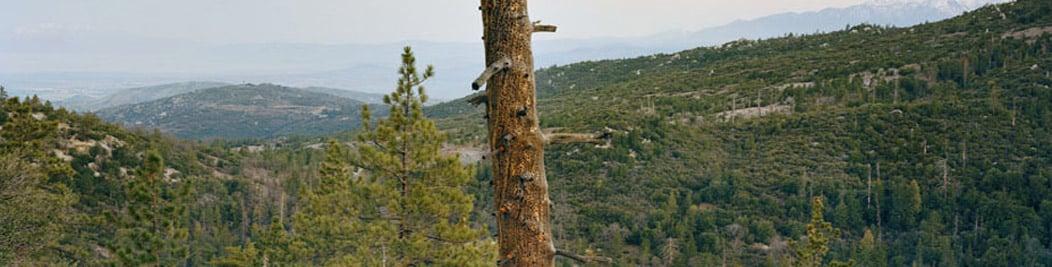 The James Jacinto Mountains Reserve