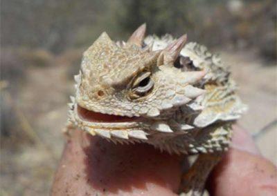 lizard guy doing lizard like things