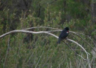 bird on a stem