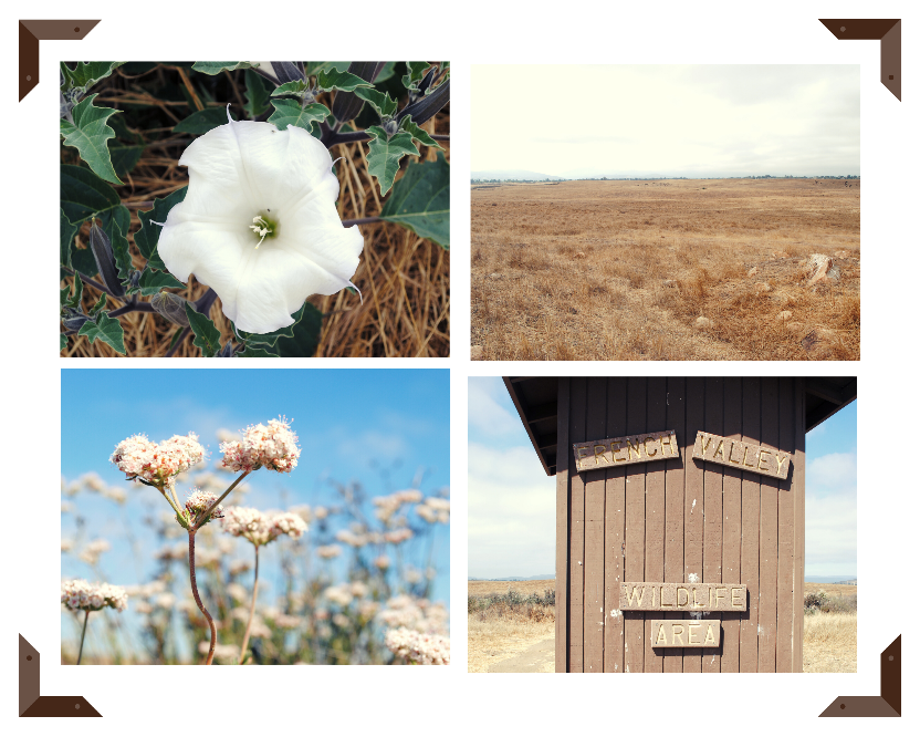 French Valley Wildlife Area Collage