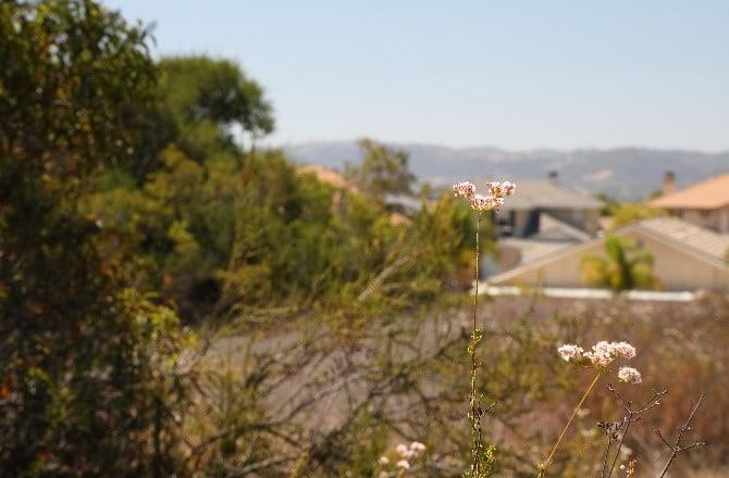Overlooking chaparral landscape
